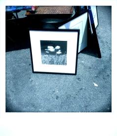 Picasso's Untited, Berkeley CA, Spring 2014.