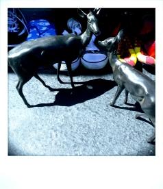 Flea Market Fauna, Berkeley CA, Spring 2014.